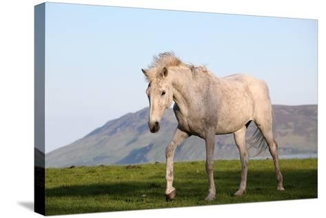 White Horse Portrait-Targn Pleiades-Stretched Canvas Print
