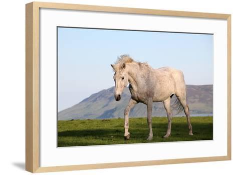 White Horse Portrait-Targn Pleiades-Framed Art Print