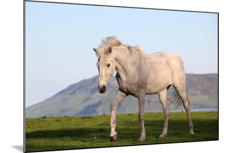 White Horse Portrait-Targn Pleiades-Mounted Photographic Print