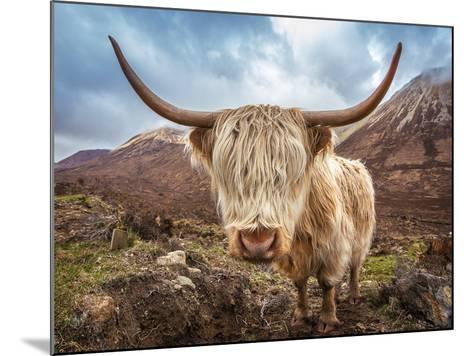 Close up Portrait of a Highland Cattle at the Glamaig Mountains on Isle of Skye, Scotland, UK-Zoltan Gabor-Mounted Photographic Print