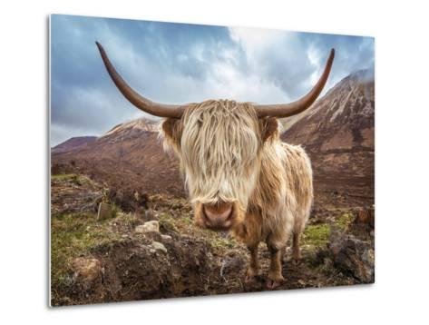 Close up Portrait of a Highland Cattle at the Glamaig Mountains on Isle of Skye, Scotland, UK-Zoltan Gabor-Metal Print