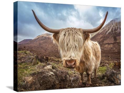 Close up Portrait of a Highland Cattle at the Glamaig Mountains on Isle of Skye, Scotland, UK-Zoltan Gabor-Stretched Canvas Print