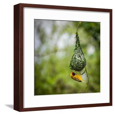 Nest-Building-Bartosz Budrewicz-Framed Art Print
