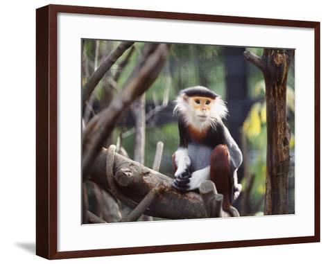 Monkey-WizData-Framed Art Print