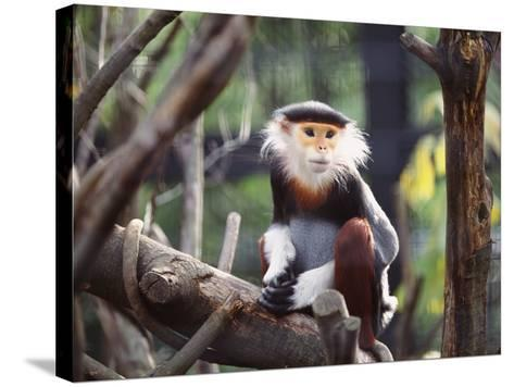 Monkey-WizData-Stretched Canvas Print