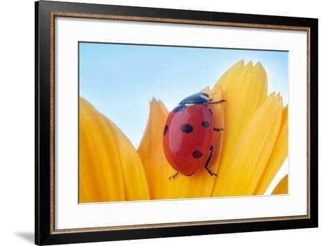 Yellow Flower Petal with Ladybug under Blue Sky-Anatoly Tiplyashin-Framed Art Print
