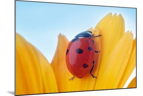 Yellow Flower Petal with Ladybug under Blue Sky-Anatoly Tiplyashin-Mounted Photographic Print