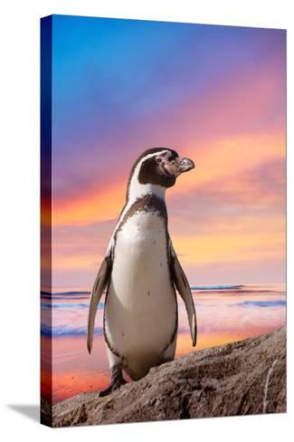 Cute Penguin with Sunset Background-Eric Gevaert-Stretched Canvas Print