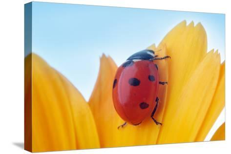 Yellow Flower Petal with Ladybug under Blue Sky-Anatoly Tiplyashin-Stretched Canvas Print