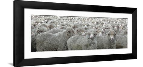 Sheep Looking-Lee Torrens-Framed Art Print