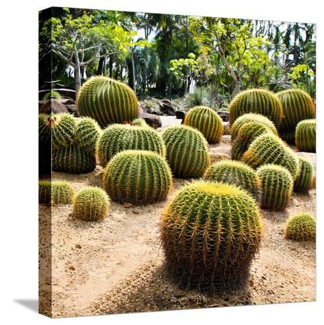 Giant Cactus in Nong Nooch Tropical Botanical Garden, Pattaya, Thailand.-doraclub-Stretched Canvas Print