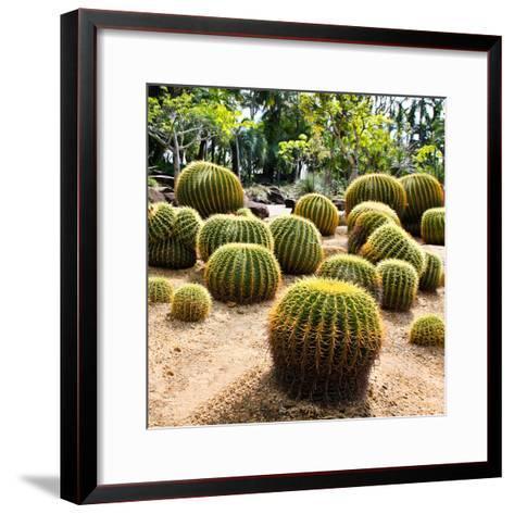 Giant Cactus in Nong Nooch Tropical Botanical Garden, Pattaya, Thailand.-doraclub-Framed Art Print