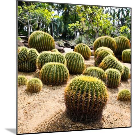 Giant Cactus in Nong Nooch Tropical Botanical Garden, Pattaya, Thailand.-doraclub-Mounted Photographic Print