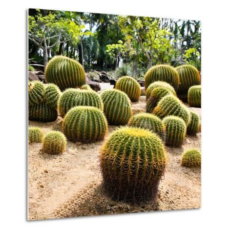 Giant Cactus in Nong Nooch Tropical Botanical Garden, Pattaya, Thailand.-doraclub-Metal Print