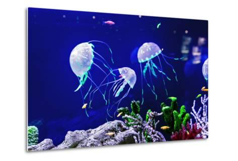 Beautiful Jellyfish, Medusa in the Neon Light with the Fishes. Aquarium with Blue Jellyfish and Lot-Dezay-Metal Print