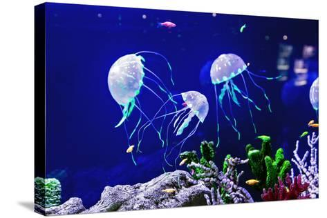 Beautiful Jellyfish, Medusa in the Neon Light with the Fishes. Aquarium with Blue Jellyfish and Lot-Dezay-Stretched Canvas Print