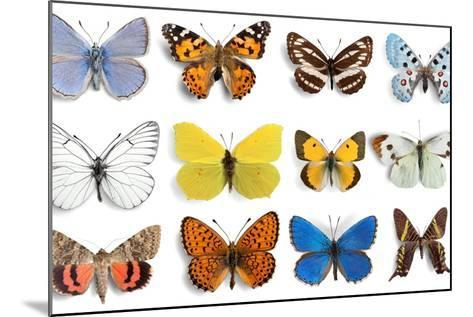 Butterfly, Insect, Wing.-Billion Photos-Mounted Photographic Print