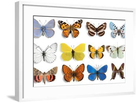 Butterfly, Insect, Wing.-Billion Photos-Framed Art Print