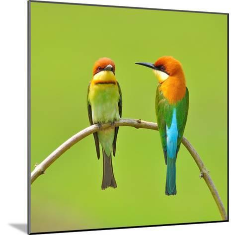 Couple of Bee Eater Bird-Butterfly Hunter-Mounted Photographic Print
