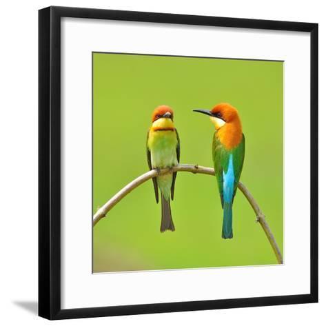 Couple of Bee Eater Bird-Butterfly Hunter-Framed Art Print