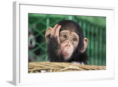 Chimpanzee Face-apple2499-Framed Art Print