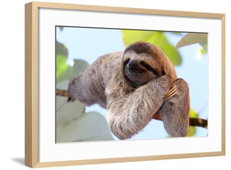 Happy Sloth Hanging on the Tree-Janossy Gergely-Framed Art Print