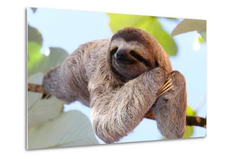 Happy Sloth Hanging on the Tree-Janossy Gergely-Metal Print
