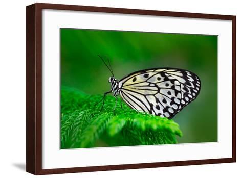 Beautiful Butterfly Paper Kite, Idea Leuconoe, Insect in the Nature Habitat, Green Leaves, Philippi-Ondrej Prosicky-Framed Art Print