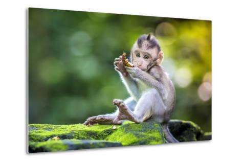Little Baby-Monkey in Monkey Forest of Ubud, Bali, Indonesia- trubavin-Metal Print