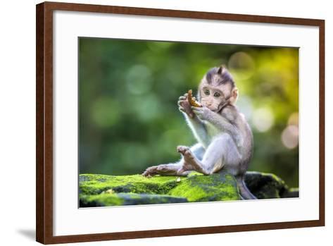 Little Baby-Monkey in Monkey Forest of Ubud, Bali, Indonesia- trubavin-Framed Art Print