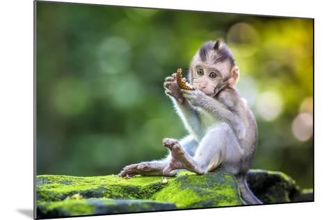 Little Baby-Monkey in Monkey Forest of Ubud, Bali, Indonesia- trubavin-Mounted Photographic Print