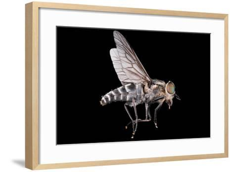 Fly Macro Insect Nature Animal Eye Bug close Small Wildlife Head Portrait Color Sharp-MURGVI-Framed Art Print