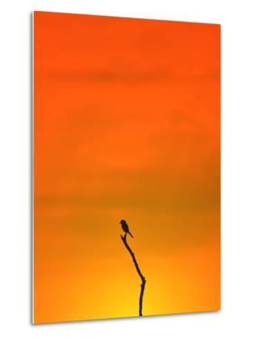 Bird Silhouette - Wildlife Background - Colors in Nature-Stacey Ann Alberts-Metal Print