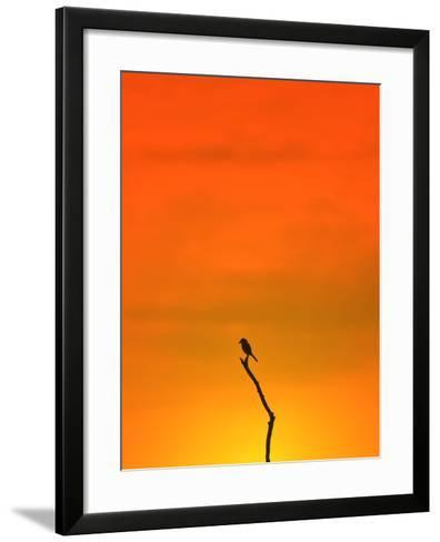 Bird Silhouette - Wildlife Background - Colors in Nature-Stacey Ann Alberts-Framed Art Print