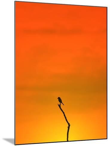 Bird Silhouette - Wildlife Background - Colors in Nature-Stacey Ann Alberts-Mounted Photographic Print