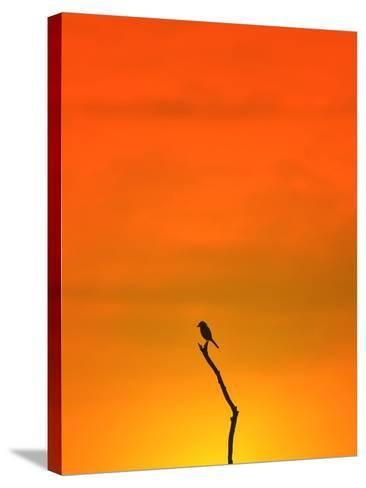 Bird Silhouette - Wildlife Background - Colors in Nature-Stacey Ann Alberts-Stretched Canvas Print