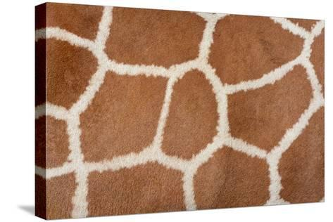 Animal Skin Background of the Patterned Fur Texture on an African Giraffe-David Carillet-Stretched Canvas Print