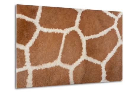 Animal Skin Background of the Patterned Fur Texture on an African Giraffe-David Carillet-Metal Print