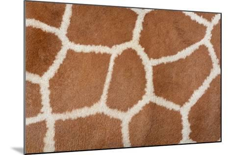 Animal Skin Background of the Patterned Fur Texture on an African Giraffe-David Carillet-Mounted Photographic Print