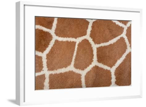 Animal Skin Background of the Patterned Fur Texture on an African Giraffe-David Carillet-Framed Art Print