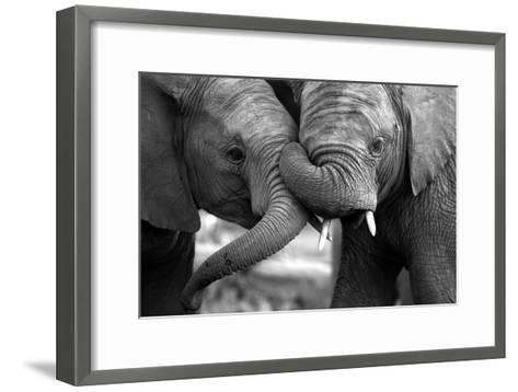 This Amazing Black and White Photo of Two Elephants Interacting Was Taken on Safari in Africa.-JONATHAN PLEDGER-Framed Art Print
