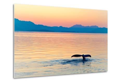 Alaska Whale Tail Sunset-tonyzhao120-Metal Print