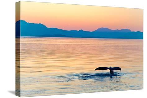 Alaska Whale Tail Sunset-tonyzhao120-Stretched Canvas Print