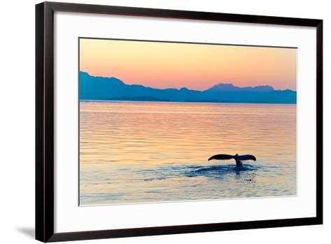 Alaska Whale Tail Sunset-tonyzhao120-Framed Art Print