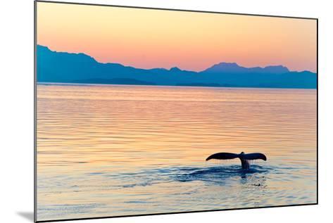 Alaska Whale Tail Sunset-tonyzhao120-Mounted Photographic Print