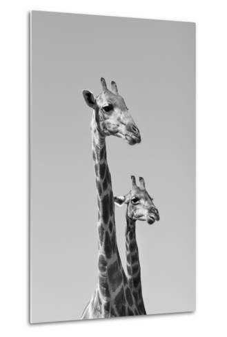 Giraffe - African Wildlife Background - Pair of Necks and Heads-Stacey Ann Alberts-Metal Print
