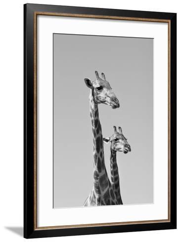 Giraffe - African Wildlife Background - Pair of Necks and Heads-Stacey Ann Alberts-Framed Art Print