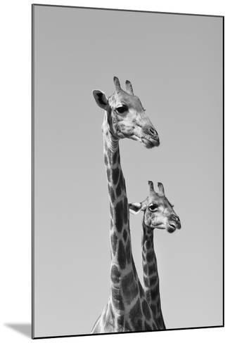 Giraffe - African Wildlife Background - Pair of Necks and Heads-Stacey Ann Alberts-Mounted Photographic Print