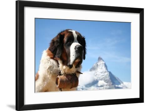 St. Bernard Rescue Dog in Zermatt, Switzerland, with Mount Matterhorn in the Background- EmmepiPhoto-Framed Art Print