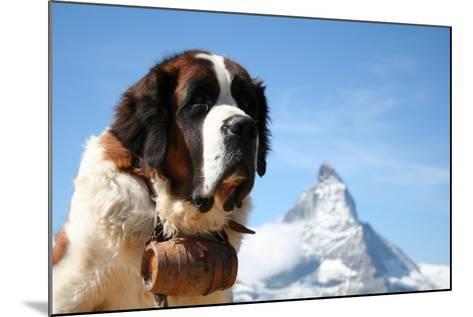 St. Bernard Rescue Dog in Zermatt, Switzerland, with Mount Matterhorn in the Background- EmmepiPhoto-Mounted Photographic Print